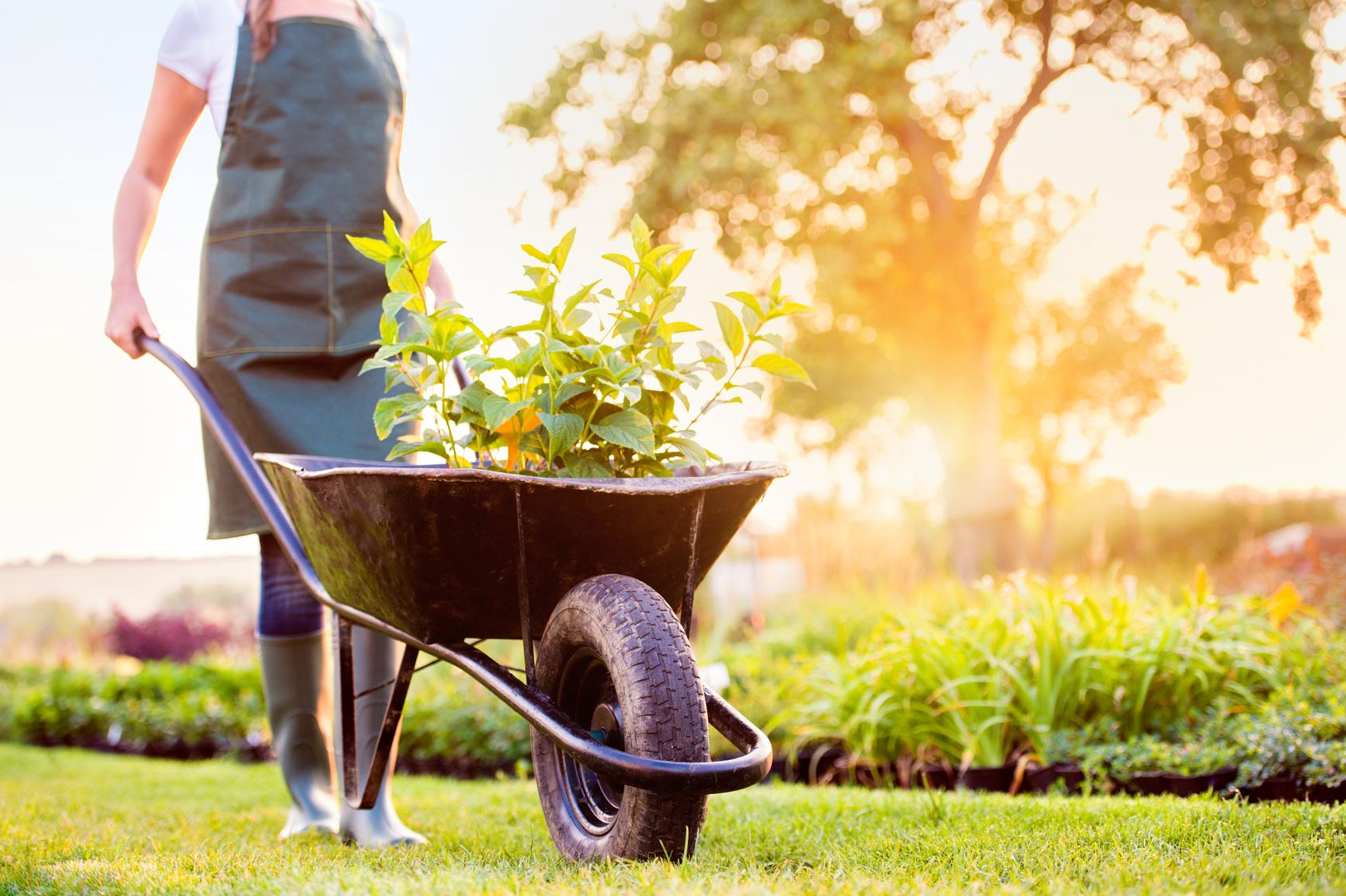Mit dem garten gesund gl cklich leben gesundheit - Garten und leben ladbergen ...